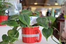 Green plant in a bright red mug with silver beaded band
