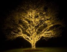 Giant tree with long wide branches strung with yellow lights